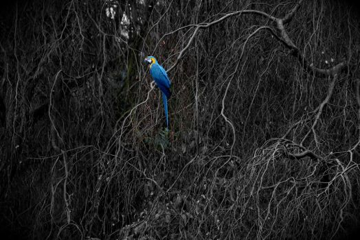 Blue Parrot by loonyleo