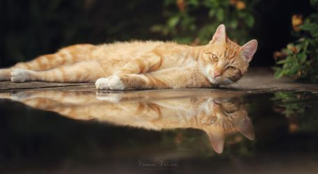 reflection by vularia