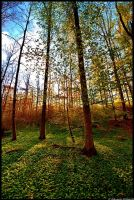 Forest places by JoInnovate