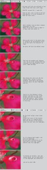 How to draw a Water Drop on a Flower by BlackDelphin