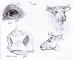 Cows - Sketch by JenTheThirdGal