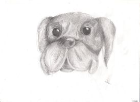 Bulldog by Bianka98