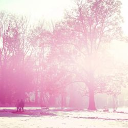 Winter walk to remember. by incredi