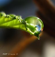 green life by sinanTR