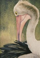 The Pelican - Watercolour by AstridBruning