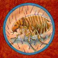 Parasite Portrait Flea by Rode-Egel