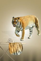 Undressing Tiger by ABIFRIEND