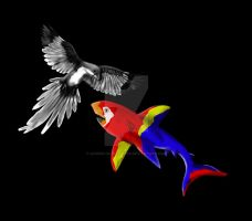 Mixed Colour contest Macaw sharks!