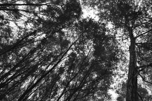Trees by R5-TheGuardian