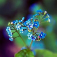 dancing colours by Laura1995