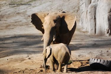 Mommy and Baby Elephant by sweetcivic