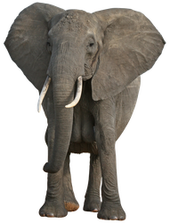 unrestricted hq elephant 1 by aio350