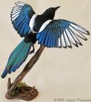 Taxidermy -  Magpie by Illahie