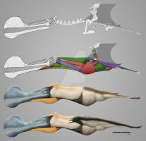 Tropeognathus mesembrinus - reconstruction by HSilustration
