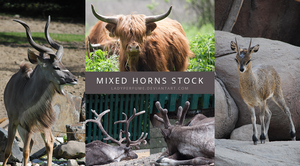 Mixed horns stock by Ladyperfume