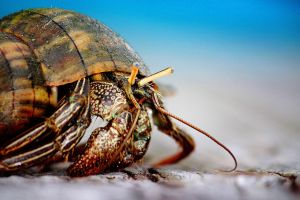 The Hermit Crab 4 by Serinidia
