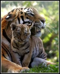 Mother and Cub 2 by Wolfy2k4