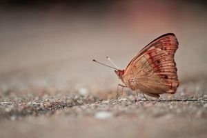 Madame Butterfly by jvrichardson