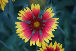 Flower Stock 40 by Malleni-Stock