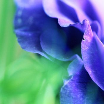 Fragrance of Violet by Yarnii