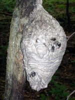 Wasp nest by Gaming-Dork