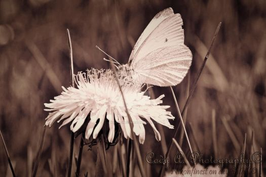 Upon delicate wings by Nikonfinest