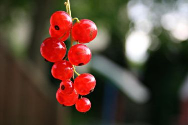 Fruit Collection: Currant by Germanstock