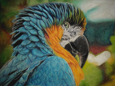 Parrot by Vanilleblanche