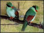 Green Magpie by cycoze
