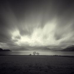 Three Trees by DenisOlivier