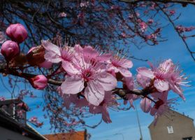 Spring in town by Stilleschrei