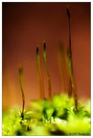 Moss Macro Experiment I by butterfly36rs