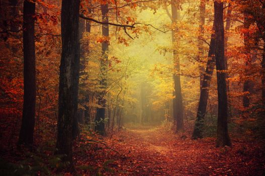 Autumn Walk XLII. by realityDream