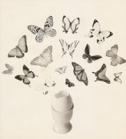 The Egg Butterflyes by hrn