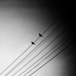 This distance... by mehrmeer