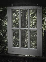Looking outside by tl3319