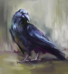Raven by Fievy