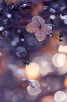 Bokeh by meganjoy