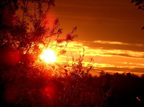 Sunset hidden behind branches by Narcisse-Noir