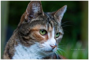 face by corniger-aries