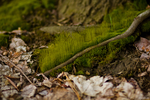 Mini Moss Forest by Bmor-Creative