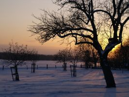 Winterlandscape II by minimeany