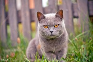 Neighbour's Cat by KrisSimon