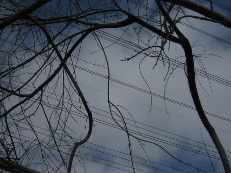 Sticks, Wires, and Sky by Fiction-Art-Author