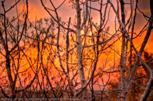 sunrise through dead tree by RobieBlair