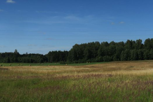 Landscape in summer 117 by MASYON