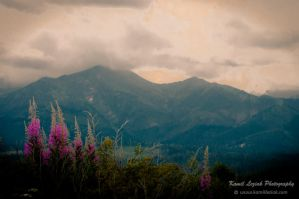 Mountain light - afternoon by vertiser