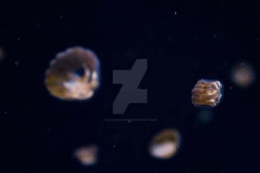Jellies by CliveAnthony