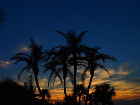 Sunset Palms by frightmare99