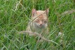 In The Grass by rattus-bavariae